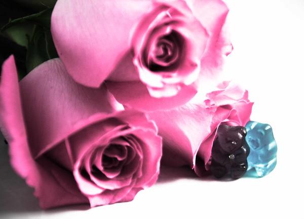 Rose Series: Gummy Admirer