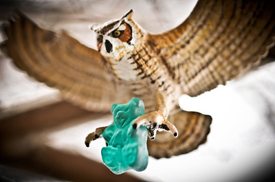 Owl & Gummy