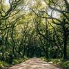 Botany Bay Trees