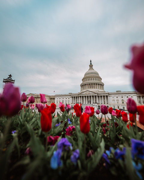Flowers at the US Capitol