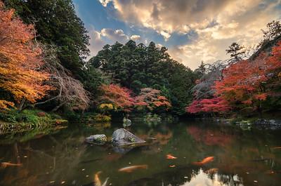 Warmth Of A Narita Autumn