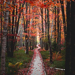 Fall Jesup Trail in Acadia National Park