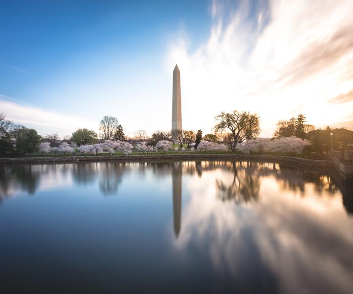 Sunrise at Washington DC Cherry Blossoms