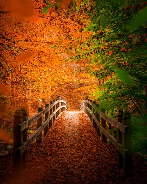 Fall in Rock Creek Park