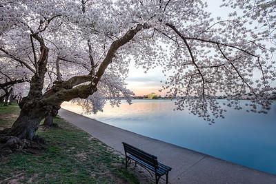 //ihitthebutton.com/cherry-blossom-festival-sunrise/