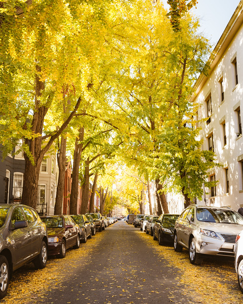 Fall Colors on Swann Street in DC
