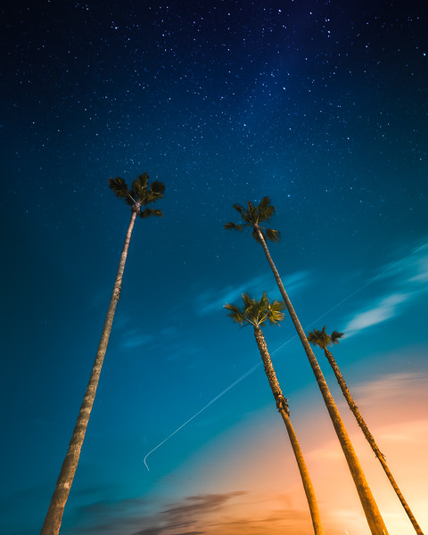 Starry Night over Palm Trees in California