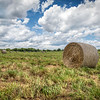 "<a href=""http://ihitthebutton.com/maryland-farm-fields/"">http://ihitthebutton.com/maryland-farm-fields/</a>"