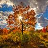 Tree Heaven