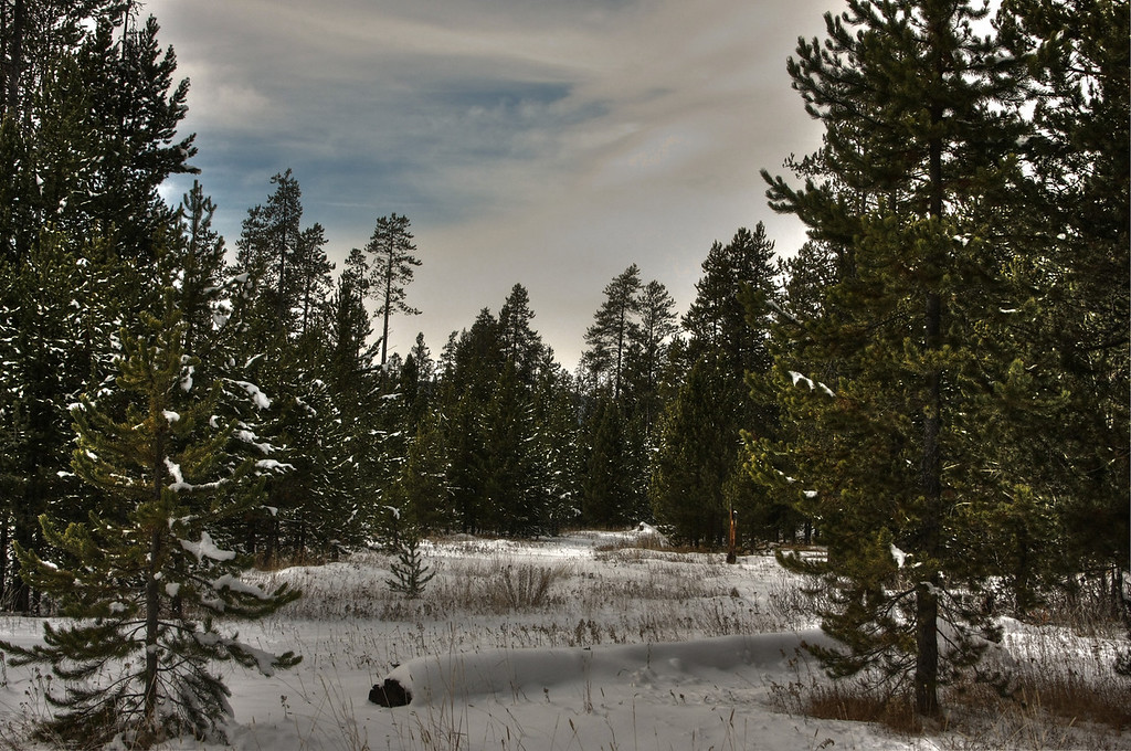 Idaho Winter Shot. Harriman Park, near Ashton, ID