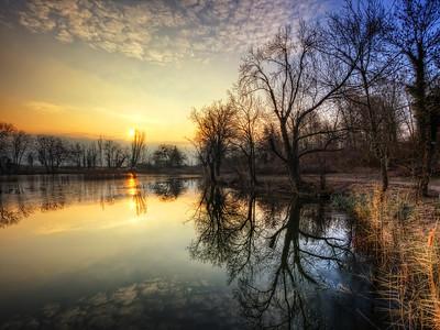 Un matin au lac Saint André - La parade des arbres