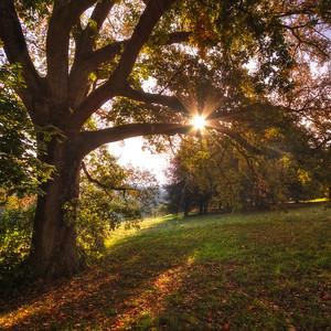 L'arbre et le soleil. Follow me on my -Facebook page:   Girolamo's HDR photos -Google+ page: Girolamo Cracchiolo -My Blog: Girolamo's HDR Photos - Le blog -My eBook: Travel in HDR