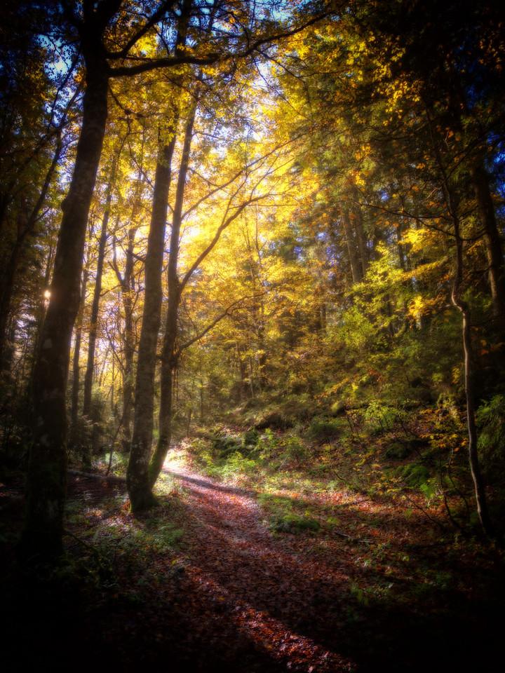 Dans la forêt.