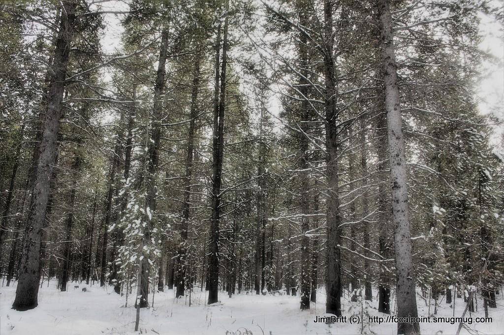 Idaho snow (HDR) - Taken over Thanksgiving holiday at Harriman Park, near Ashton, ID