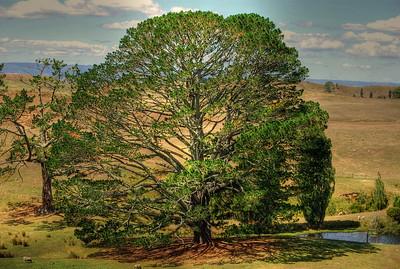 Hobbiton Tree