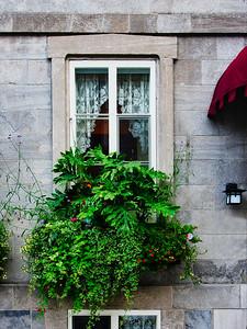 Bearded Window - Vieux Québec, Canada