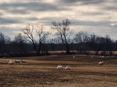 Field of 'Dreams' - PEC, Canada