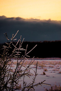 After the Ice Storm - PEC, Canada
