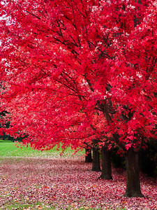 Red is Best - Richmond Hill, Ontario, Canada
