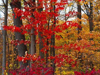 Fall Splendour - Toronto, Ontario, Canada