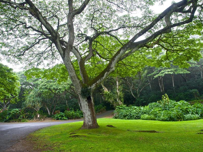 Waimea Valley - Haleiwa, Hawaii