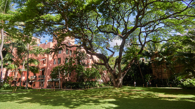 A Grand Tree - Honolulu, Hawaii