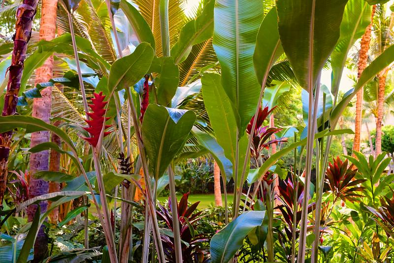 Left Variety, Royal Hawaiian - Honolulu, Hawaii
