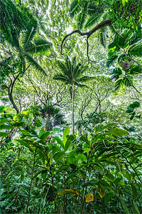 Looking Up, Hawaii Tropical Botanical Garden, Hawaii