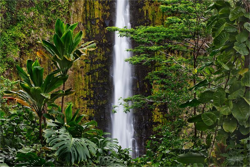 Tropical Plunge, Akaka Fall, Hawaii