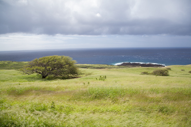 South Maui, west...past Hana.  Cattle country.