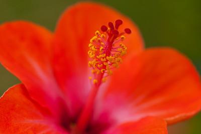 20140329_Flowers-9
