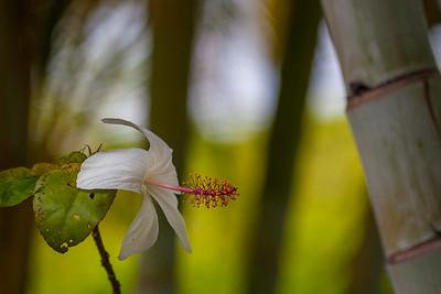 20130810_Wailuku_Flowers-18