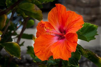 20130322_Wailuku_Flowers-016