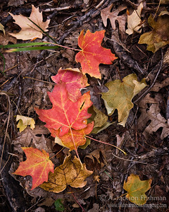 Forest floor palette in New Mexico's Black Range, October 2010.