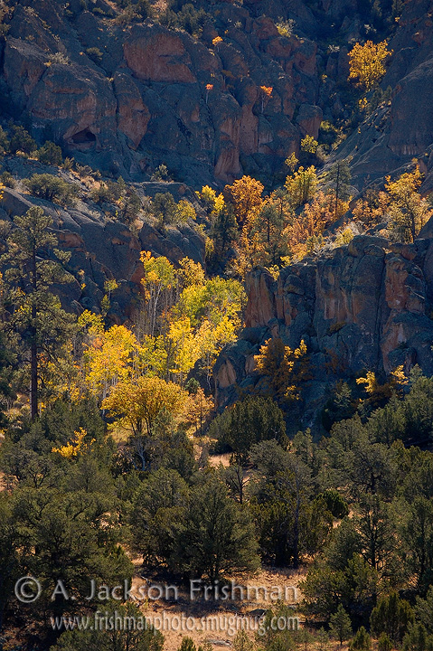 Autumn Aspens and Pinon Juniper, a rare combination. Catron County, New Mexico, October 2008.