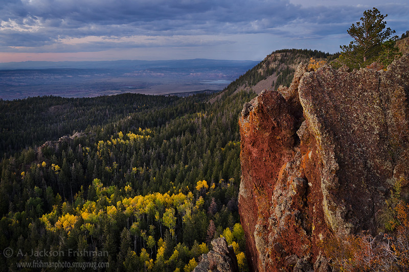 Fall aspens below La Grulla Plateau in New Mexico's Jemez Mountains, September 2012.