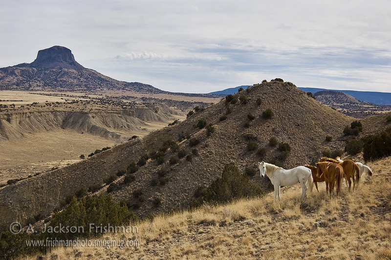 Free roaming horses in New Mexico's Rio Puerco valley, February 2009.