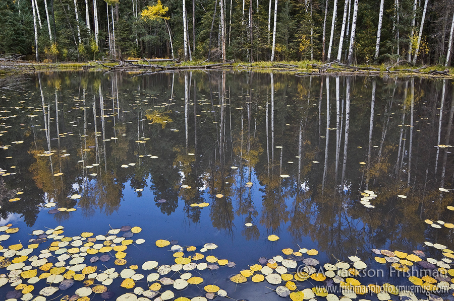 Autumn at Hillsboro Lake in New Mexico's Black Range, Aldo Leopold Wilderness, October 2010.