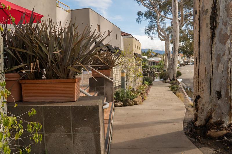 Eucalyptus lined street in Montecito