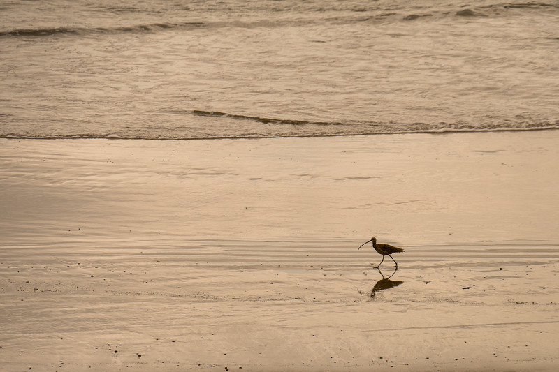 Dinner time at Peir Sholes Beach, Ventura County