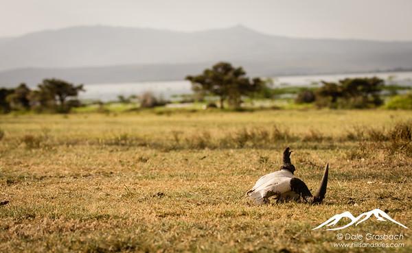Kenya Still Life