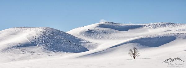Snowy Curves