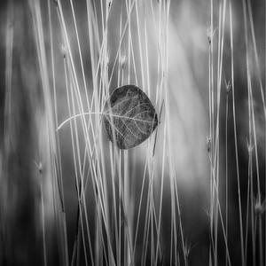 Leaf Pickin' in the Grass