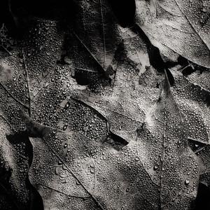 Beads on Leaves
