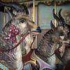 Regal goats