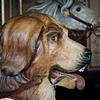 Lovable dog
