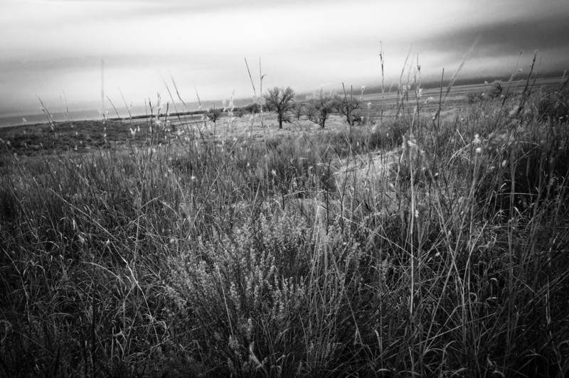 Sand Creek Massacre site.  The women hid their children in the grass.