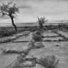 Camp Amache Ruins