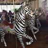 Prancing zebras