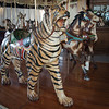 Tiger and friends